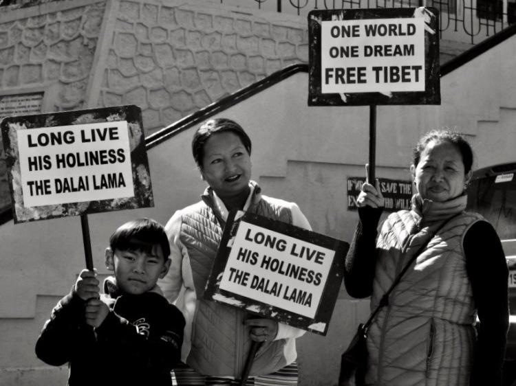 Knema_Tibet1